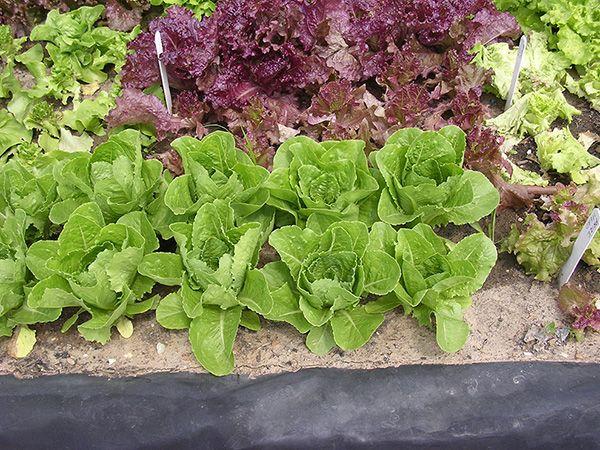 Winter Garden Crash Course Oklahoma Gardener Web Articles Fall