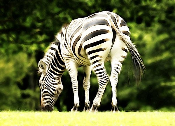 The Zebra Print By Steve Mckinzie