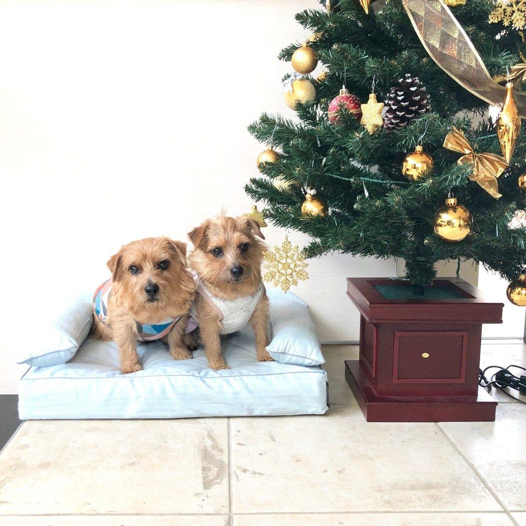 メリークリスマス 犬のベッド アンベルソ公式ブログ メリークリスマス メンちゃん ミコちゃんは昨夜クリスマスパーティーをしました ワンちゃん ニャンちゃんにとって素敵なクリスマスになりますように 犬 大型犬 クリスマス パーティー