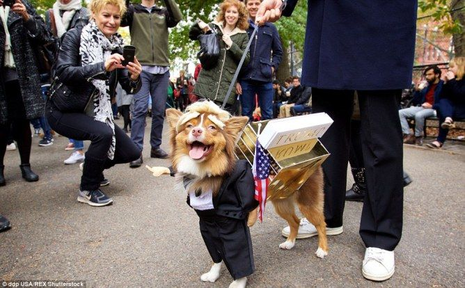 Pin On Dog Halloween Costumes Funny Diy And Owner Included