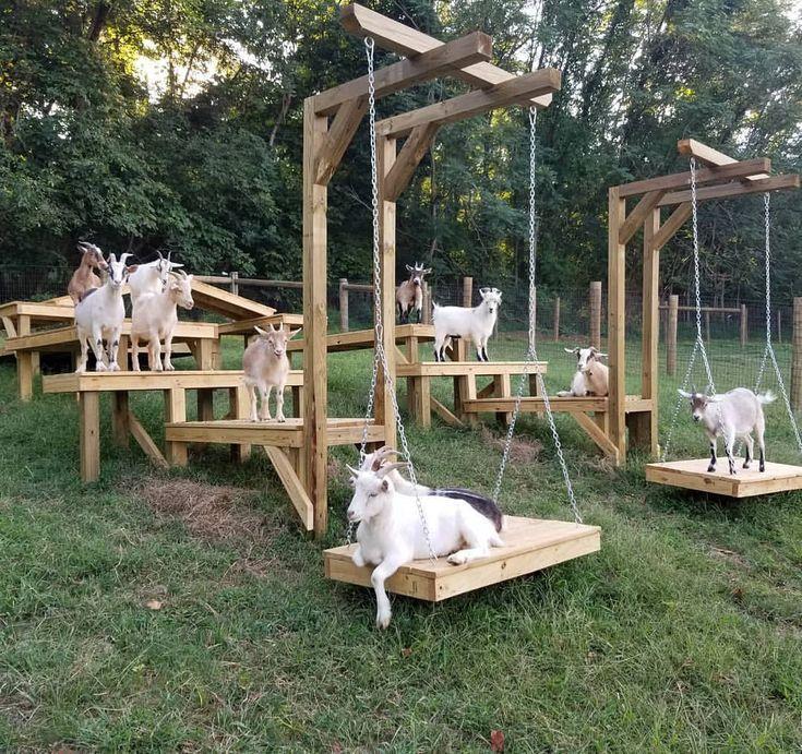 Goat Squad Ziege Spielplatz Ziege Ziegen Unterstand