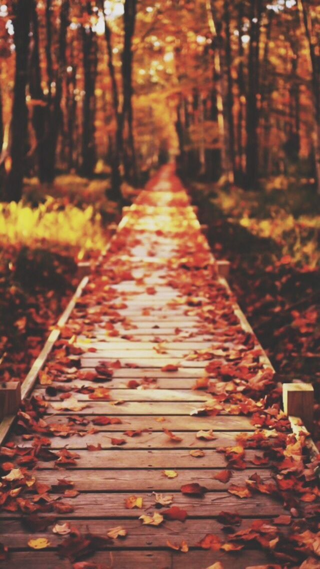 fall wallpaper Tumblr Sonbahar