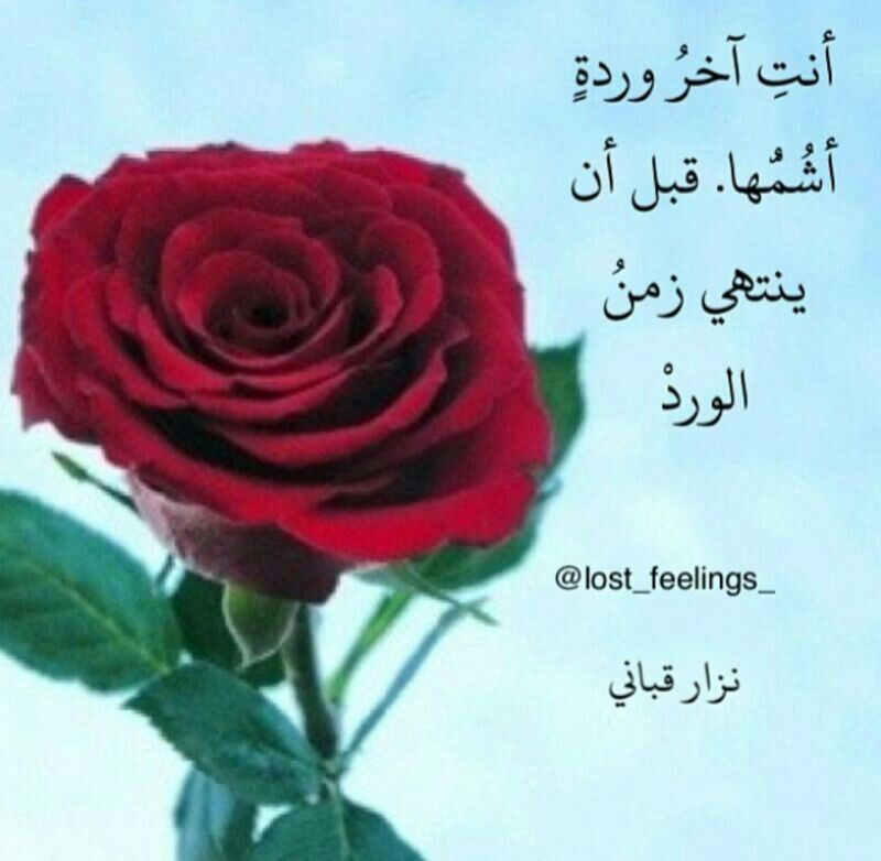 Pin By Fatima On Arabic Red Roses Love Messages Rose