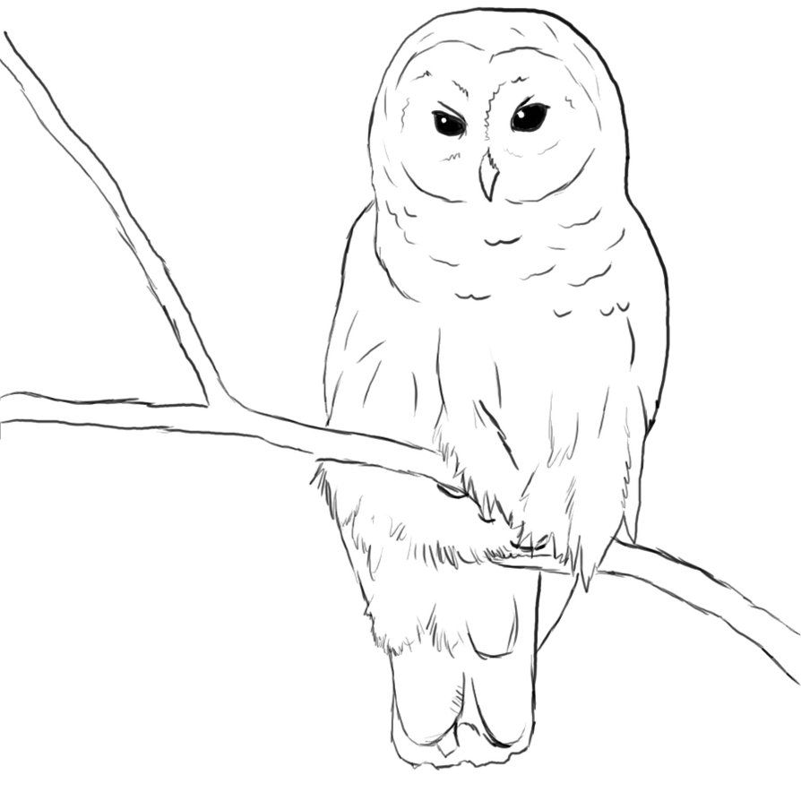 Uncategorized Easy Drawings Of Owls how to draw a realistic owl step by drawing tutorials for line kootation com