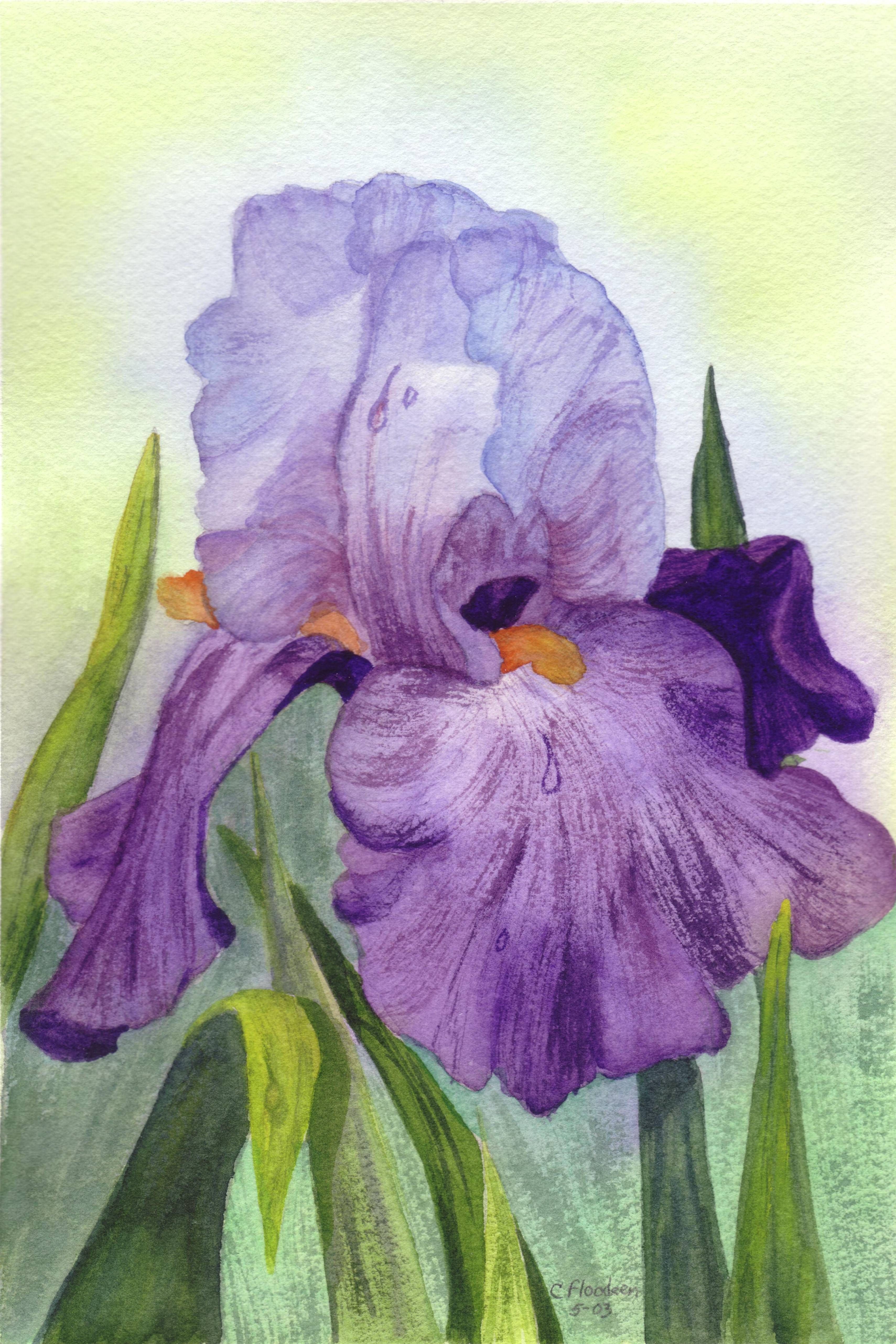 Purple iris my water color paintings pinterest purple iris purple iris izmirmasajfo