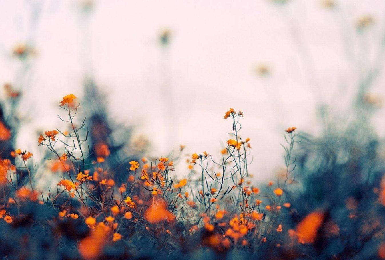 Macbook Wallpaper Hd Flowers