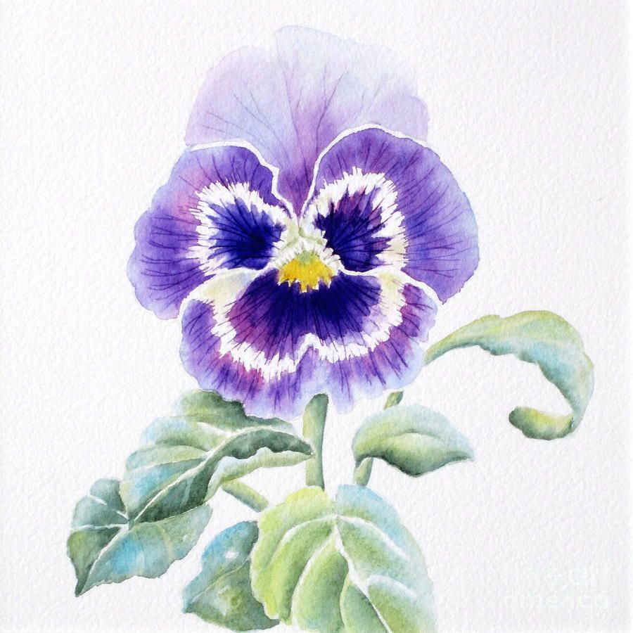 Pin By Mary O Brien On Desert Pansies Art Flower Painting Botanical Painting