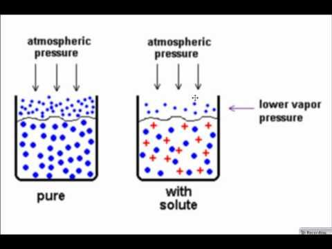 """lab 1 colligative properties osmotic pressure The pressure required to achieve osmotic equilibrium is known as the osmotic pressure note that the osmotic pressure is the pressure required to stop osmosis, not to sustain it osmotic pressure is the pressure required to stop osmotic flow it is common usage to say that a solution """"has"""" an osmotic pressure of x atmospheres."""