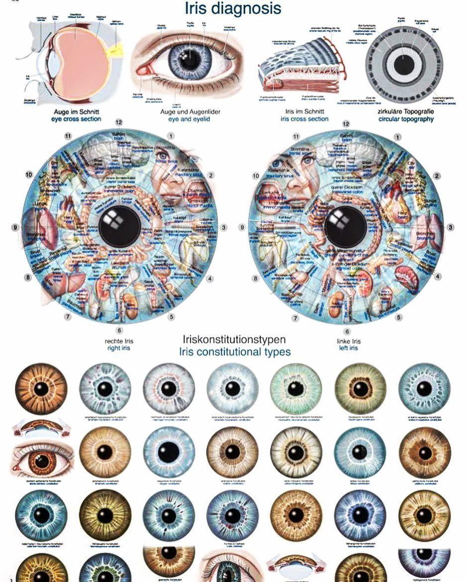 Irisdiagnose: Was die Augen über deinen Körper verraten | Body ...
