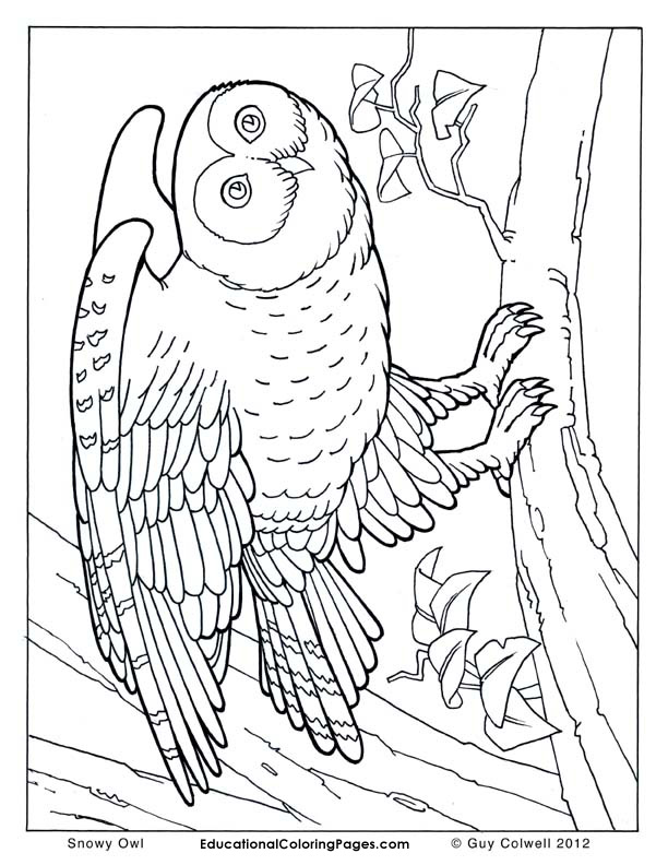 Snowy Owl Owl Coloring Pages Bird Coloring Pages Animal Coloring Pages