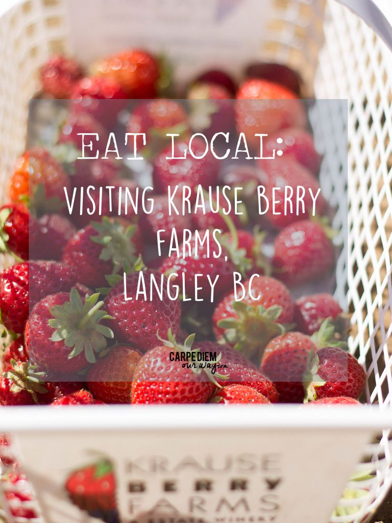Berry Picking Krause Berry Farm Langley Bc Carpe Diem Our Way Travel Krause Berry Farm Berry Picking Langley