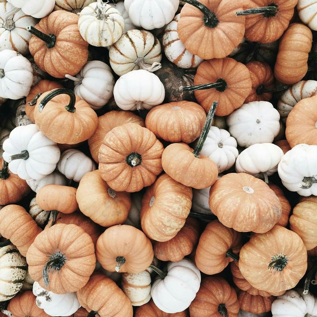 White And Muted Orange Pumpkin Pile Autumn Fall Thanksgiving Pumpkin Patch Autumn Aesthetic Fall Wallpaper