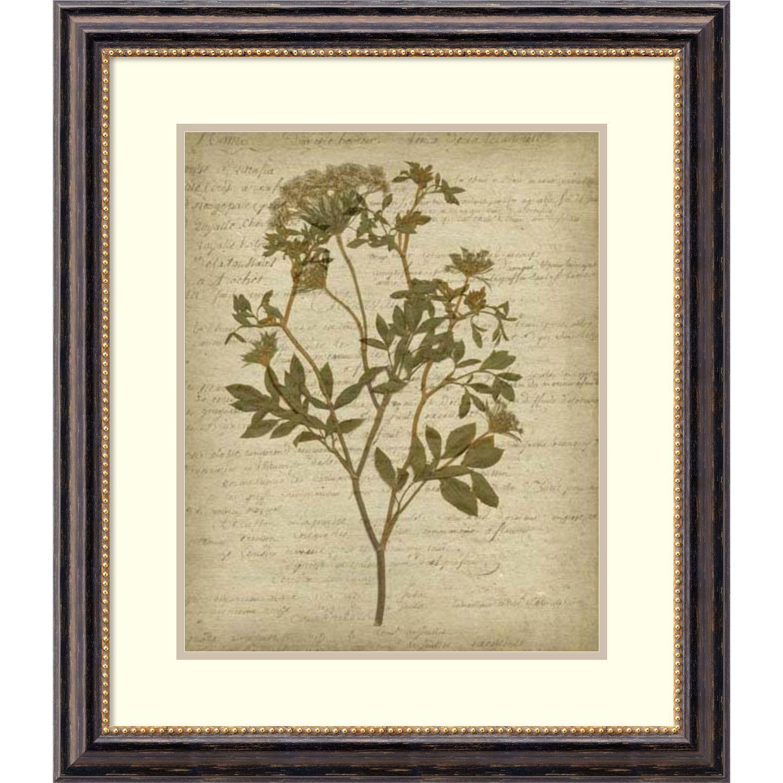 Amanti Art Romantic Pressed Flowers Iv By Jennifer Goldberger Framed