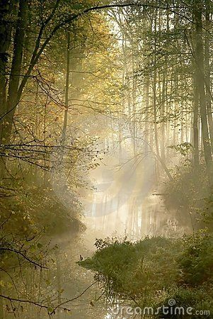 Description Magical Hazy Forest In Late Autumn With The Sunbeams Of Light Making The Way Through The Trees Morning Mist And S Misty Forest Nature Images Photo