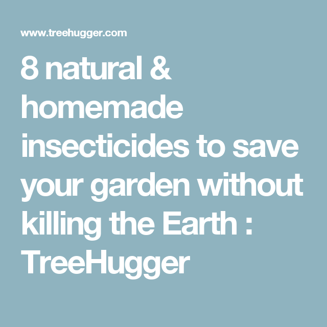 8 natural & homemade insecticides to save your garden without killing the Earth : TreeHugger