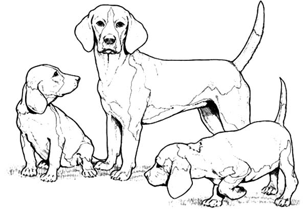 Chihuahua Dog Family Coloring Pages Netart In 2020 Family Coloring Pages Family Coloring Dog Coloring Page