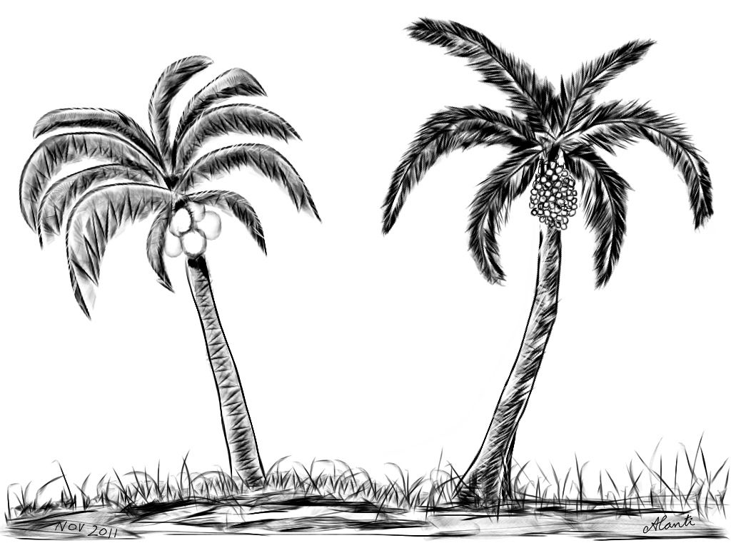 How To Draw Realistic Palm Trees