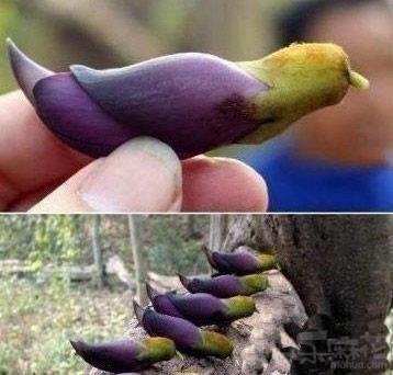 Eggplant or bird?