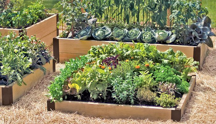 Guide To Raised Garden Beds Plans Timing Tending Garden Beds