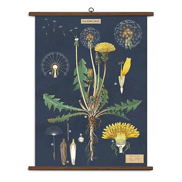 Dandelion Vintage School Chart Paper Source Botanical Art Botanical Prints Vintage Botanical Prints