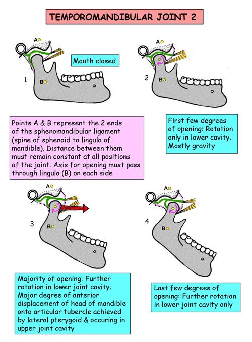 Instant Anatomy Head And Neck Joints Temporomandibular Joint 2