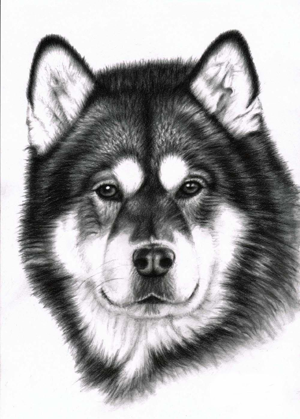 Alaskan Malamute Charcoal Www Arts And Dogs De Pintura Perro Silueta De Perro Revistas De Arte