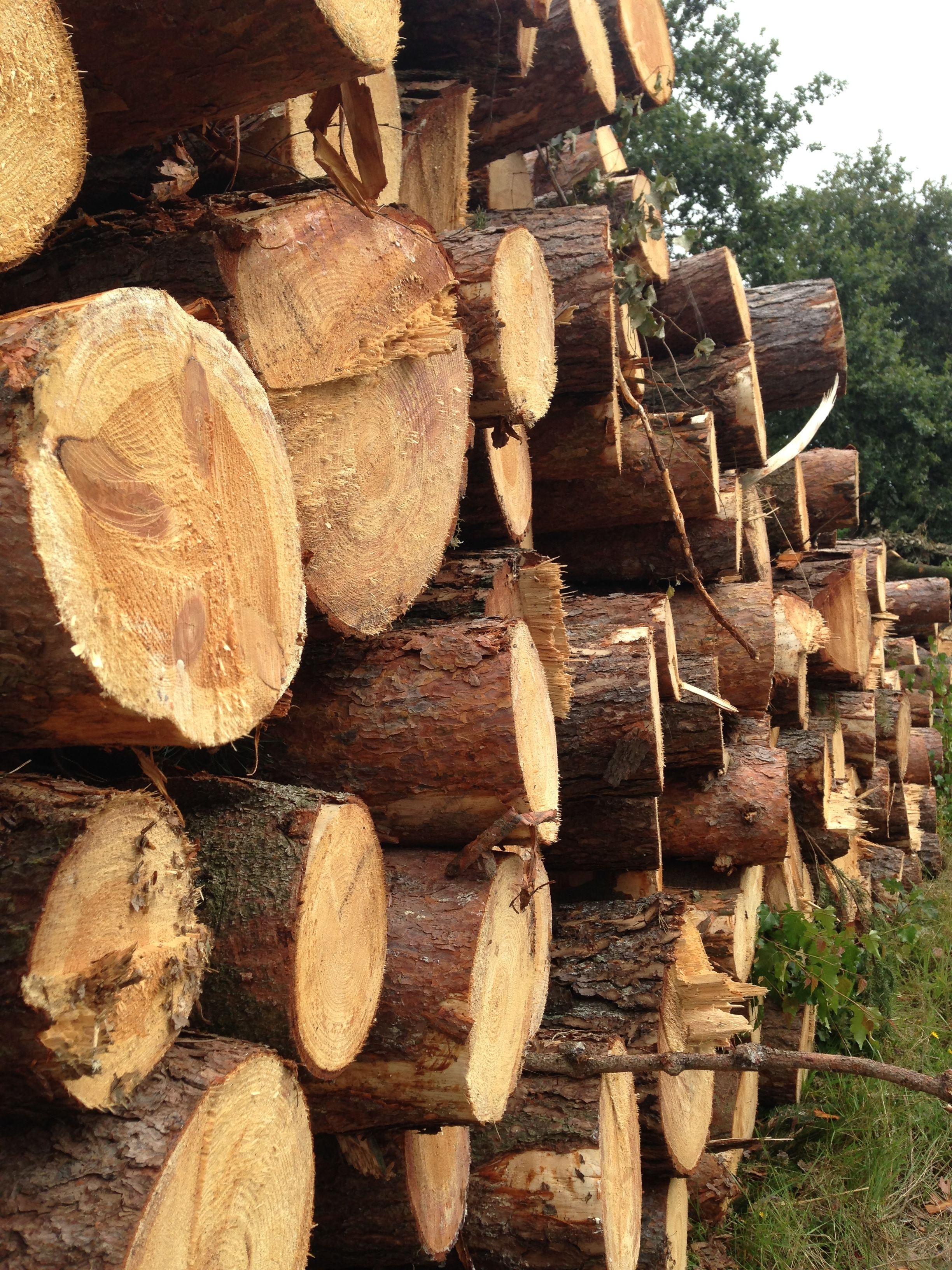 Ecocrops International Images Of Logs Wood Woodworking Logging