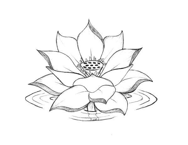 Lotus Flower Lotus Flower Blooming On The Water Coloring Page