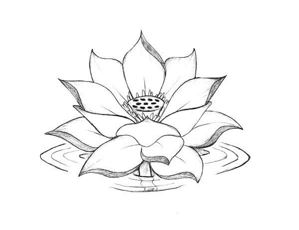 Lotus Flower Lotus Flower Blooming On The Water Coloring Page