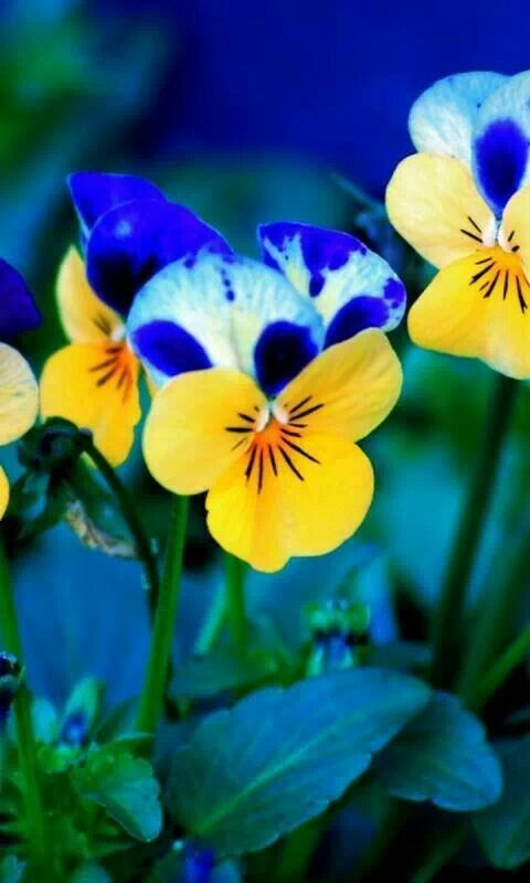 Best Beautiful Flowers wallpapers pictures PC Full HD Wallpapers