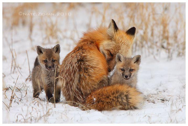 Magical Nature Tour Animals & Nature Photo 可愛すぎる動物