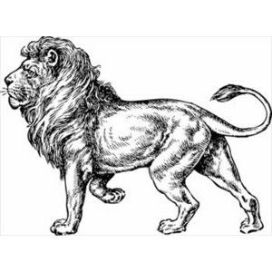 Really Nice Full Body Sketch Of A Lion Cute Lion