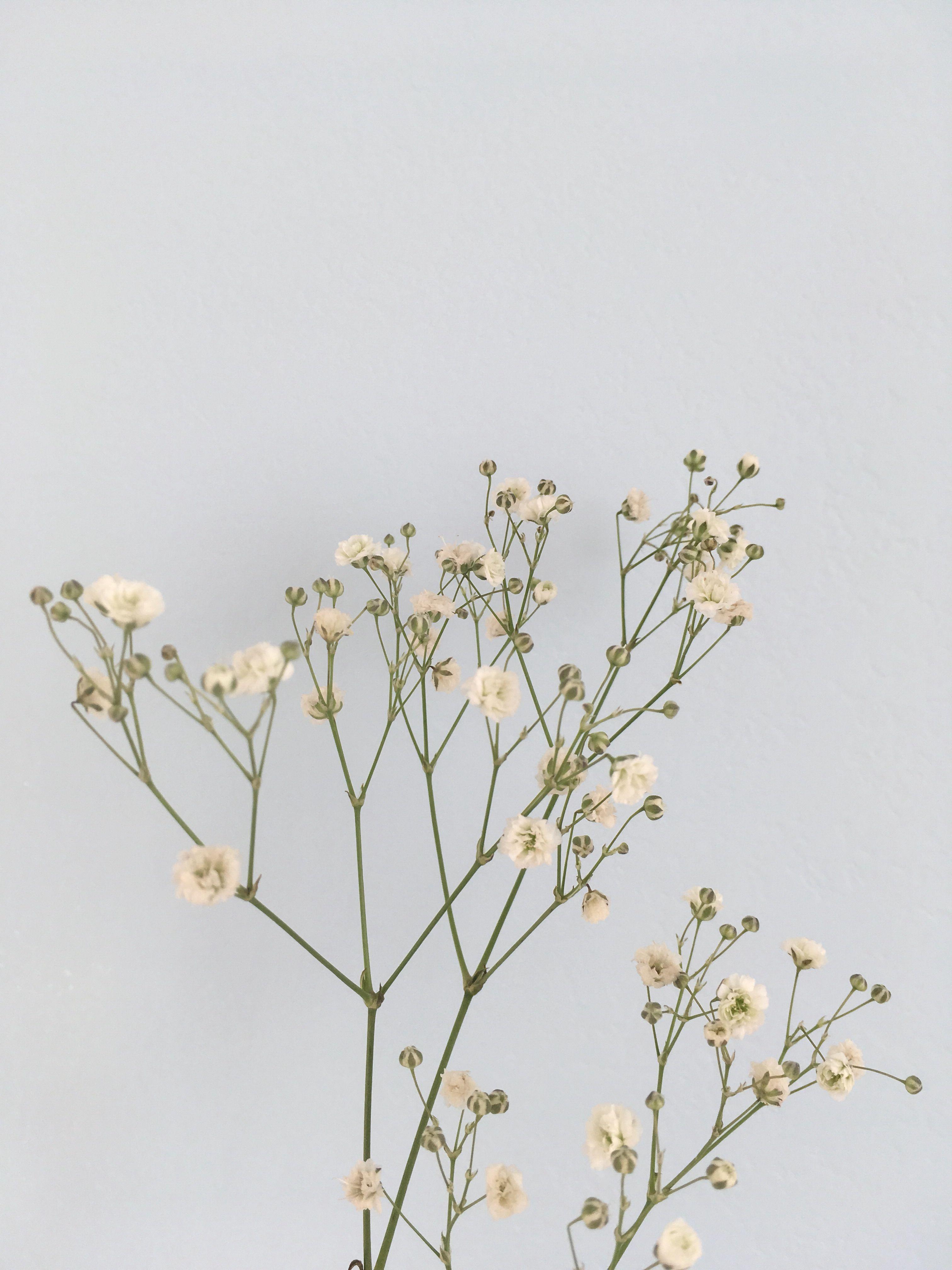 flowers aesthetic minimalism pastel blue white