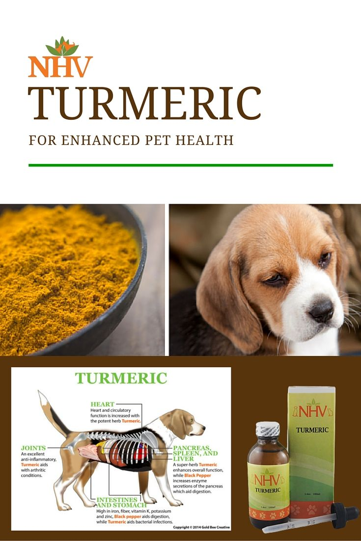 Turmeric for Dogs Dog cancer, Pet health, Dog food recipes