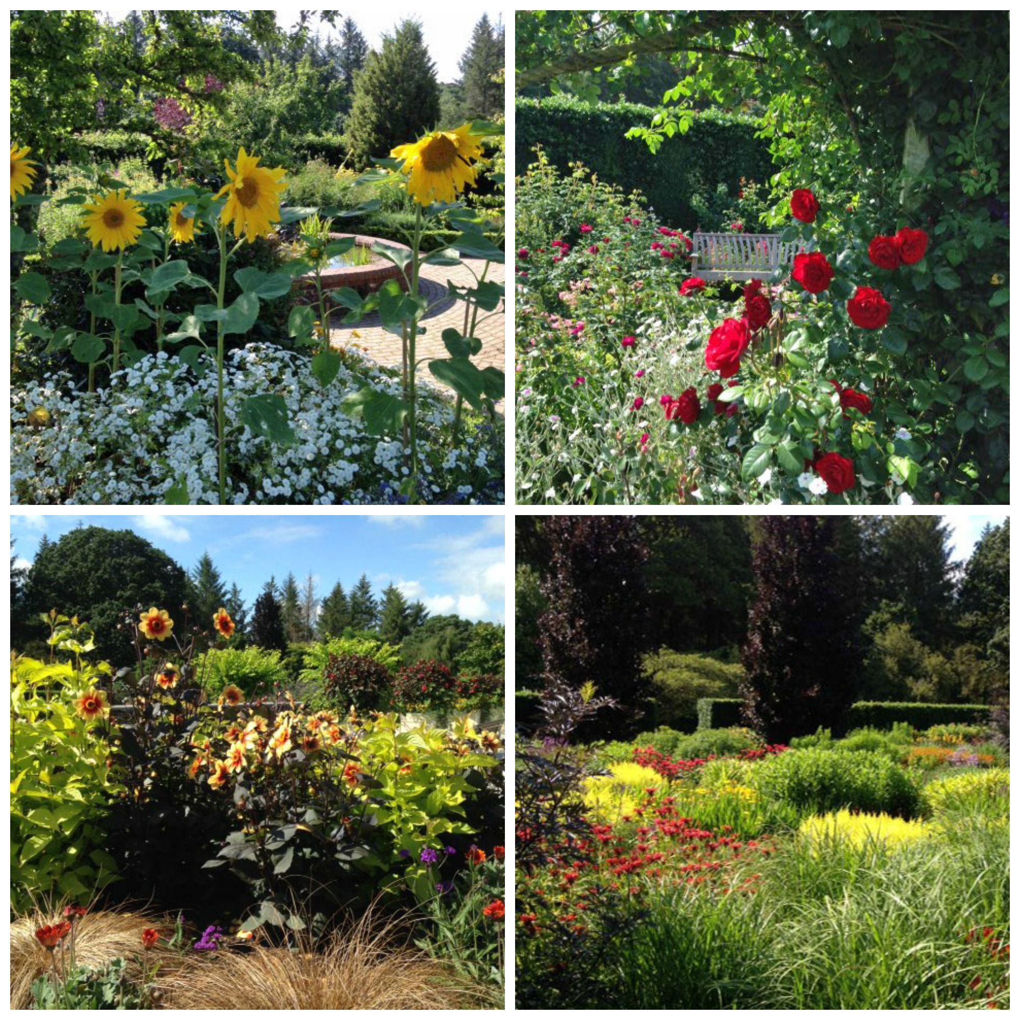 RHS Rosemoor Gardens, Rose Festival And Hot Garden