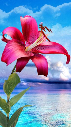 Flowers Magic Touch HD Live Wallpaper Beautiful For Girls