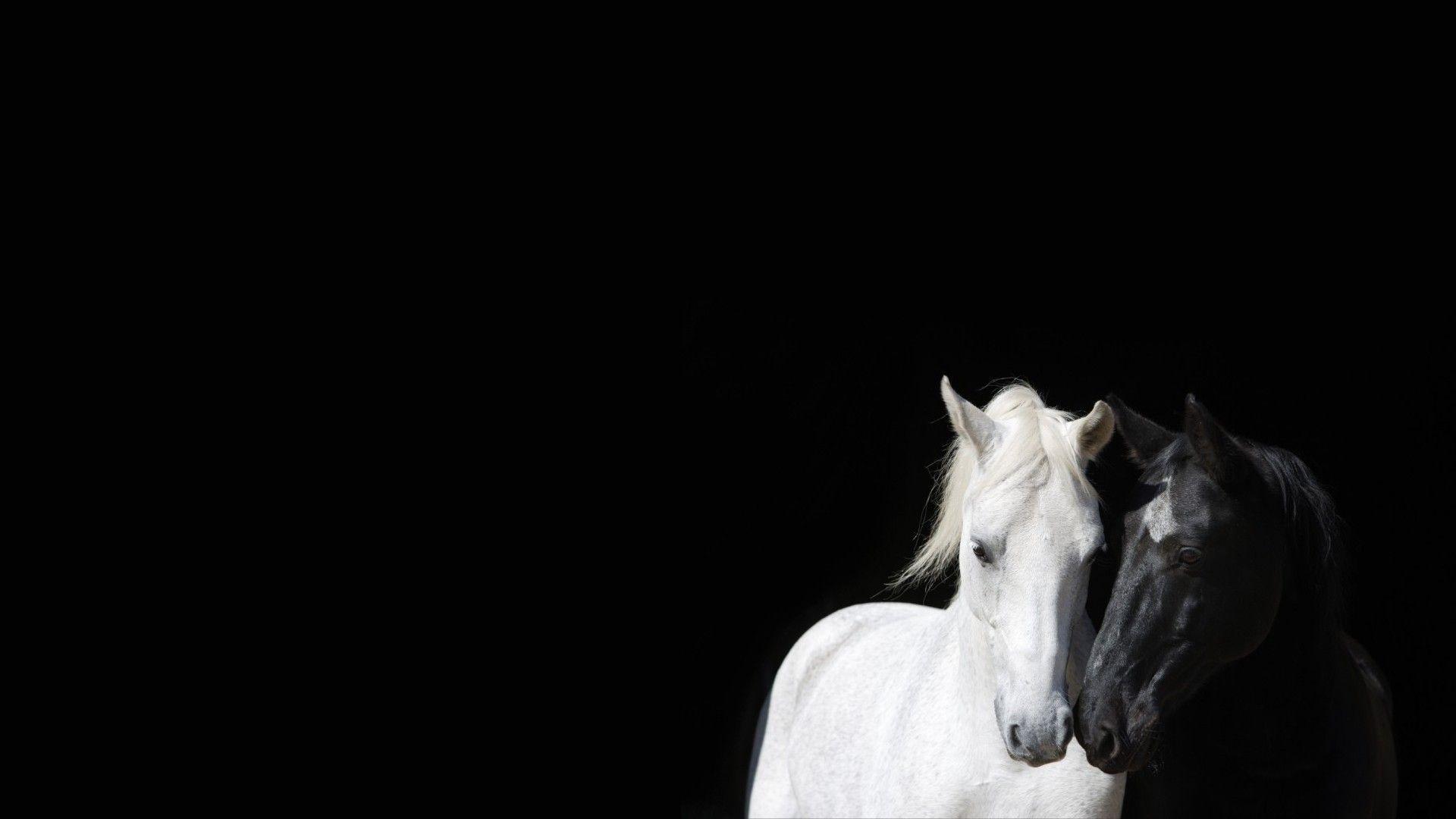 Animaux Noirs Et Blancs Chevaux Fond D Ecran Animaux Noir Et Blanc Paysage Noir Et Blanc Noir Et Blanc