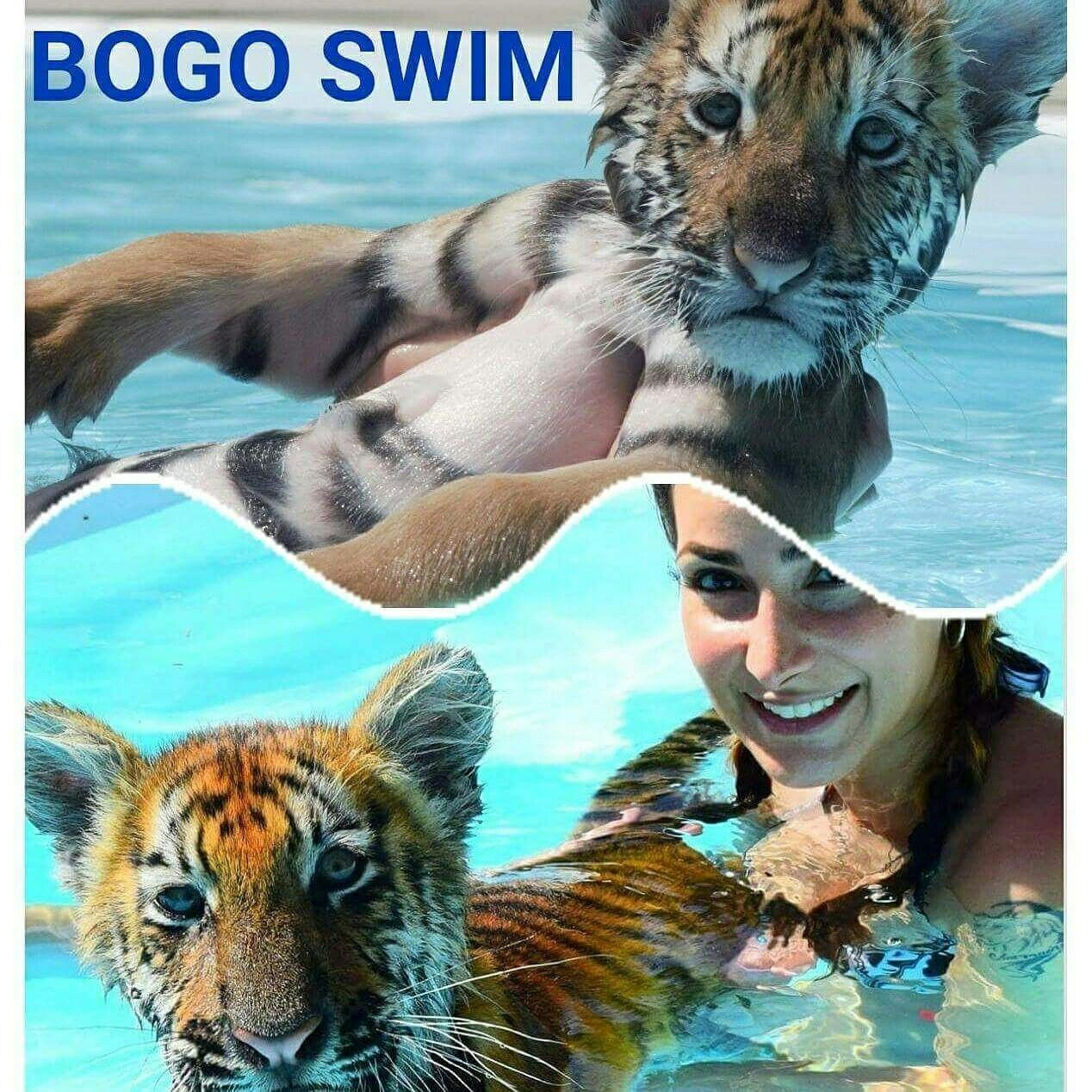 Mesmerizing Bookatiger De Decoration Of Book A Tiger Swim Get 2nd Swim