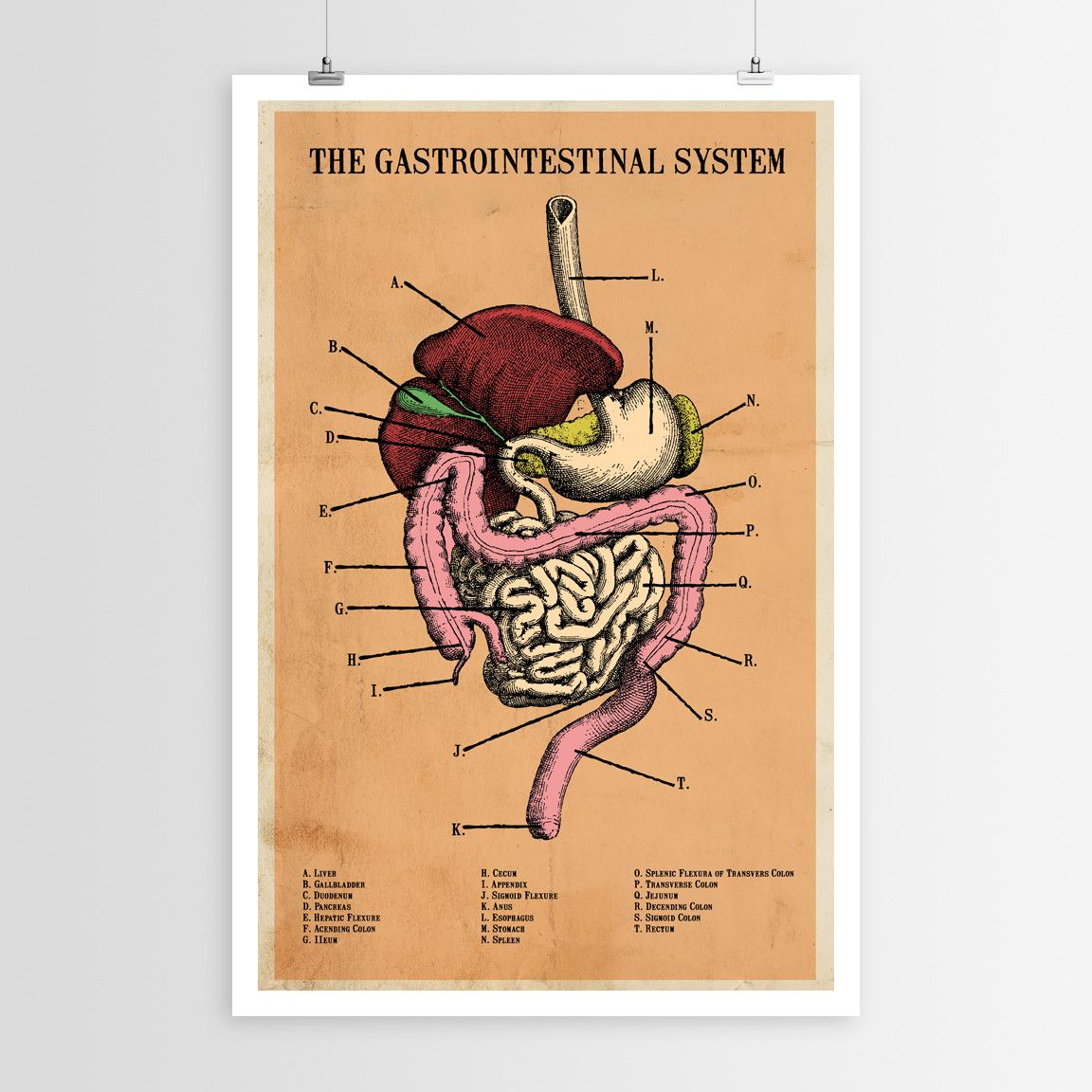 The Human Gastrointestinal System Poster Artsy Pinterest