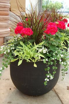 How To Plant A Patio Pot Container Garden Potted Plants Outdoor