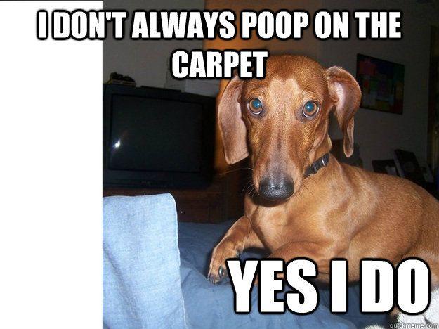 Funny Hot Dog Meme : Dachshund meme google search humor