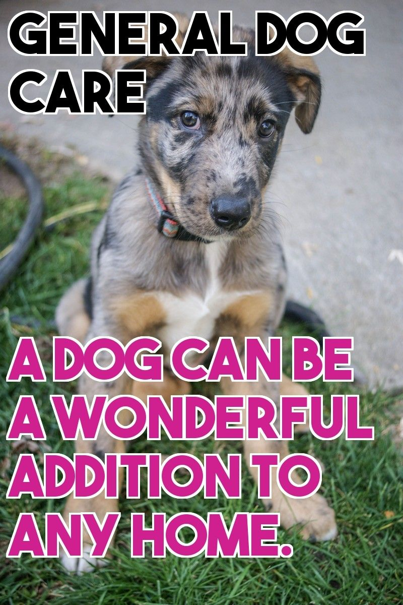 The Best About Dog Care Advice Dog Care Dogs Healthy Environment