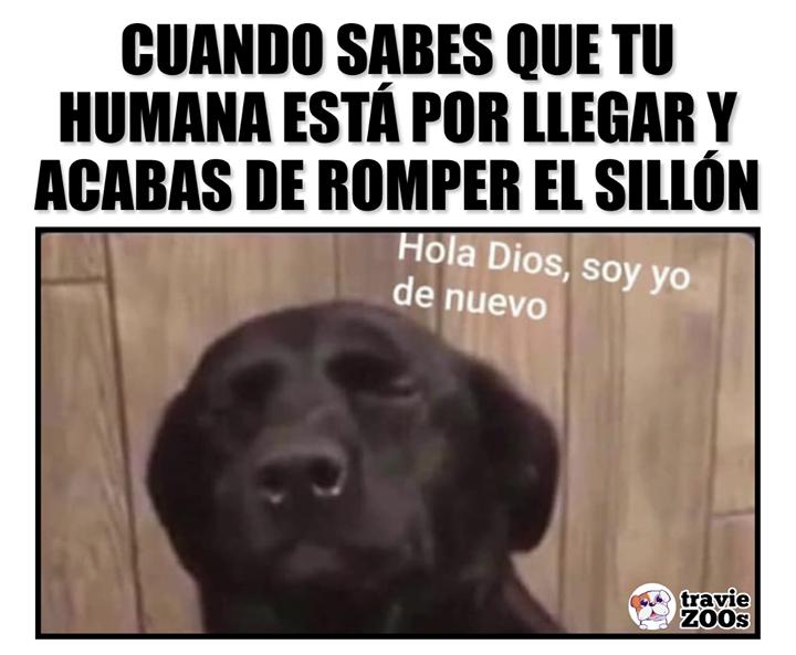 Necesito Tu Ayuda Funny Animal Memes Memes Best Memes