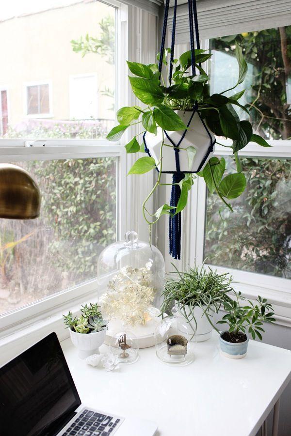 Un doux jardin d\u0027hiver Jardin d\u0027intérieur, plante Madmeoiselle - sorte de peinture pour maison