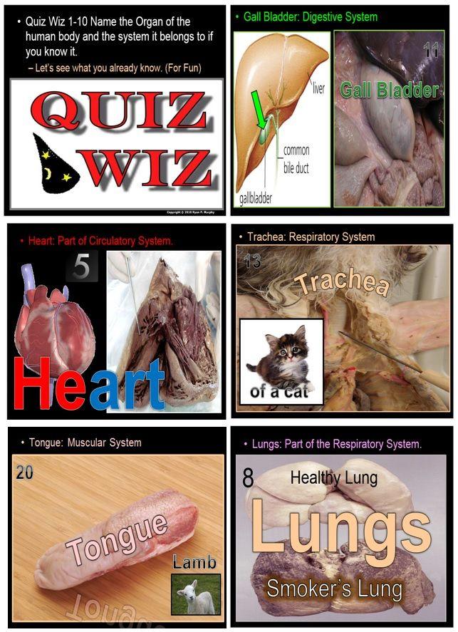 Free Anatomy Levels Of Biological Organization For Fun Quiz Game I