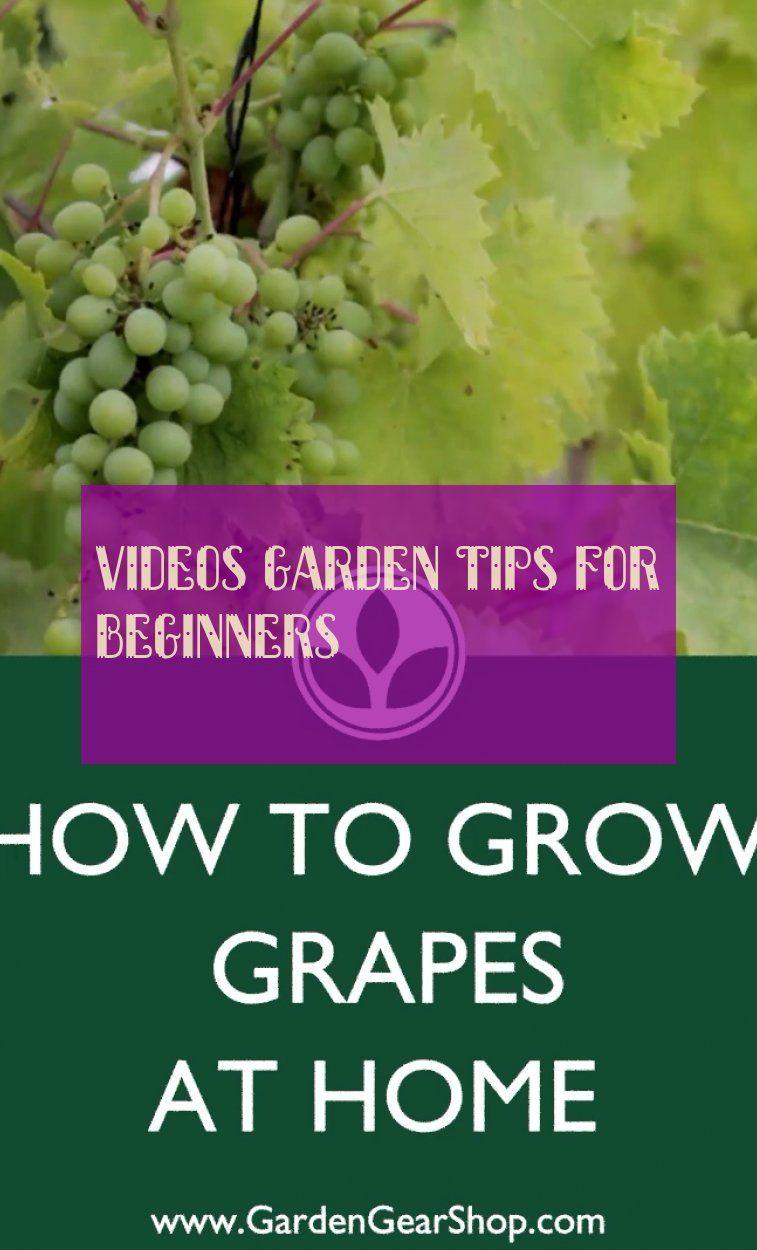 Videos garden tips for beginners