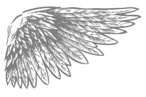 detailed wing tattoo ideas pinterest birds wings and bird wings