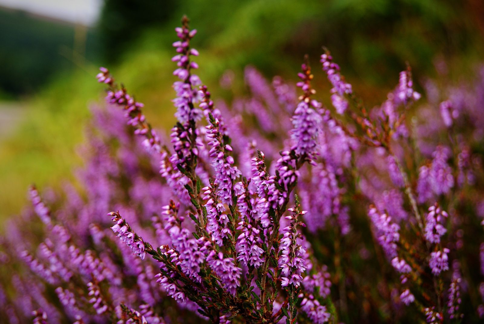 12 Best Plants To Bring Colour To A Winter Garden Bushes And Shrubs Dwarf Evergreen Shrubs Winter Plants