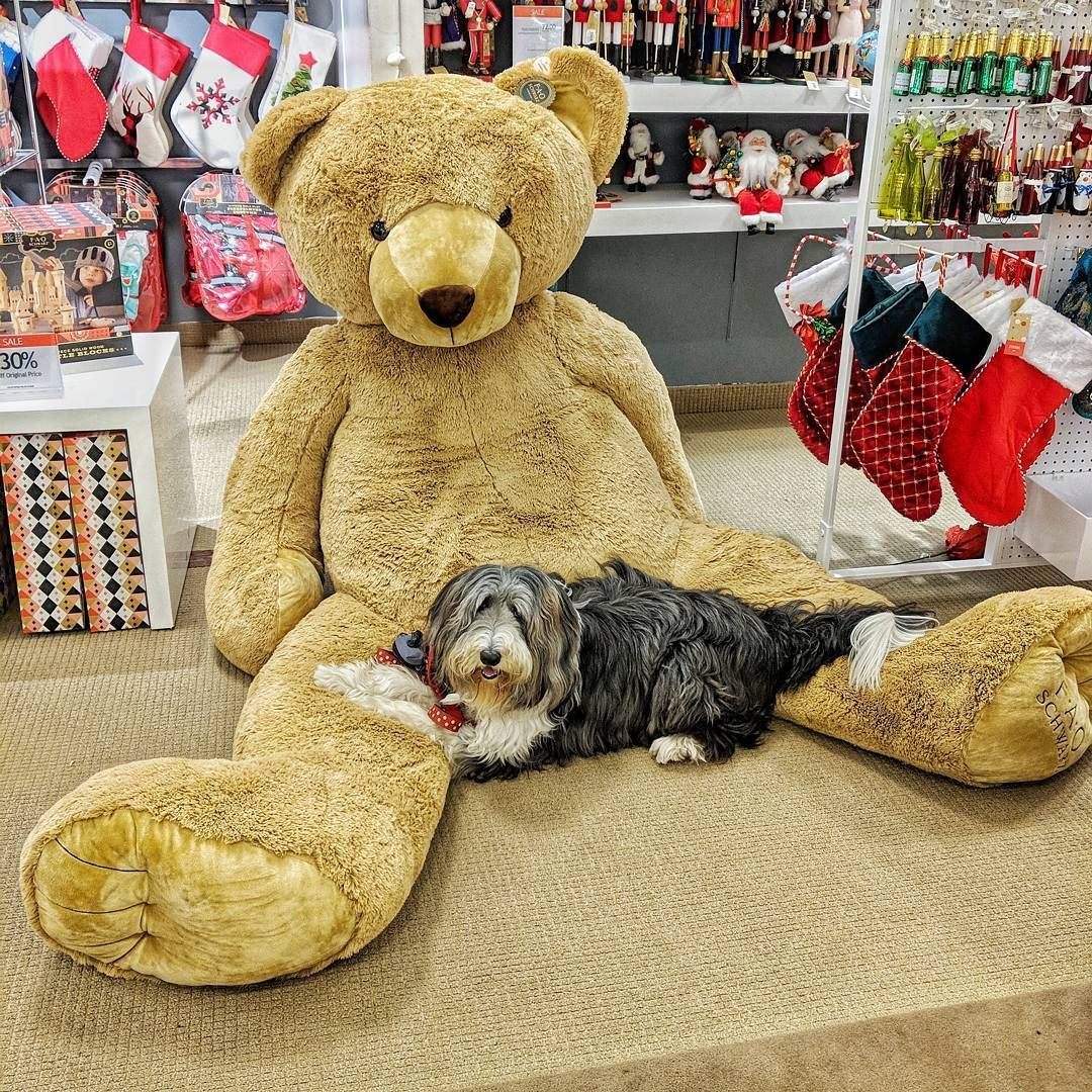 Dog cuddles giant teddy bear at stanford shopping mall in