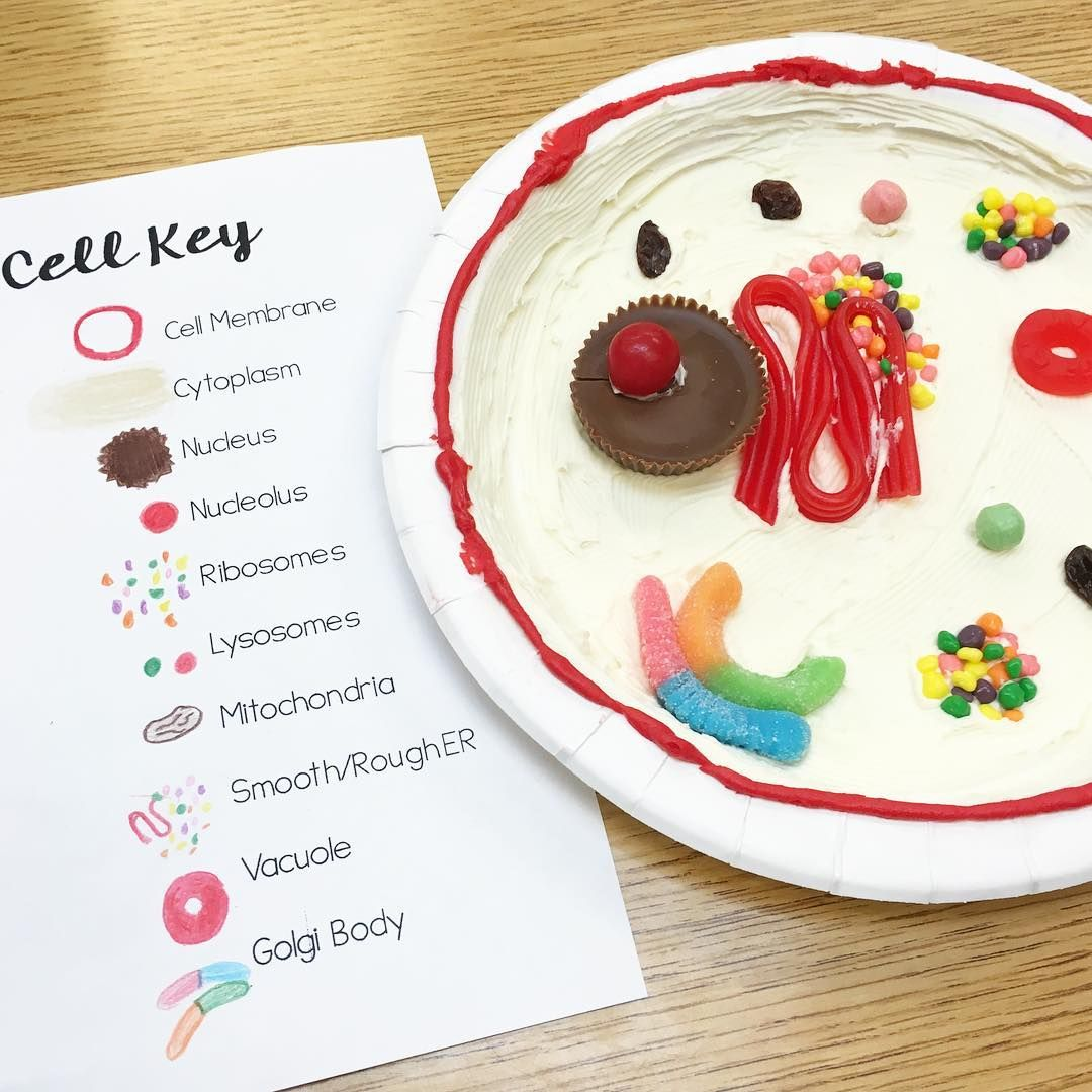 We made edible animal cell models in science today! I told ...